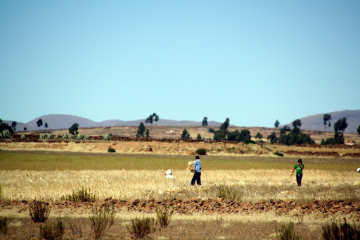 Farm machinery is very uncommon in Bolivia.