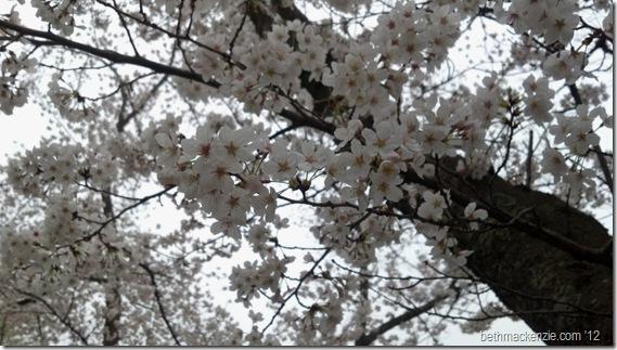 2012-03-20_11-37-34_313