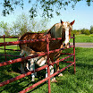 2012-Mar-24_Ennis_horse_and_baby_05.jpg