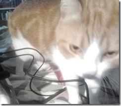 Bevis från spionkamera - Maurice kan också...