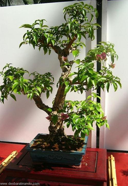 bonsais arvores em miniatura desbaratinando (44)