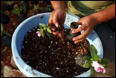 Dai lacrimogeni nascono fiori.. (5)