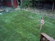 new grass (1)