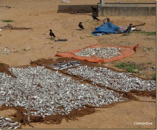 Poissons schs  la plage Sri Lanka