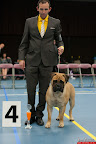 20130510-Bullmastiff-Worldcup-0603.jpg