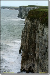 Bempton Cliffs D2h  05-05-2012 14-44-03
