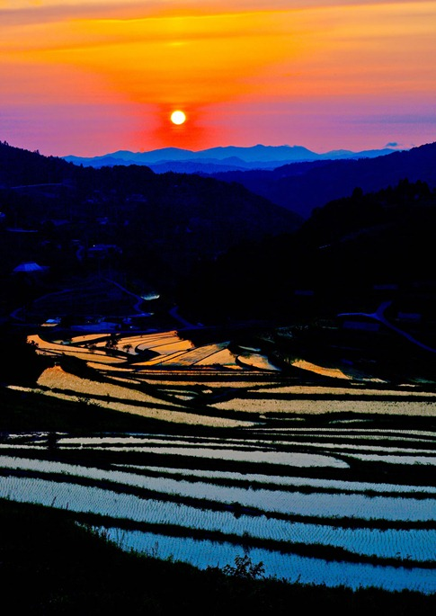 Evening sun in terraced paddy fields.