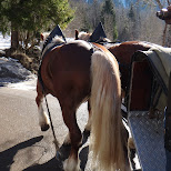 horses taking me to neuschwanstein castle in Füssen, Bayern, Germany
