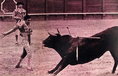 1973- Sevilla Galan Morcillero 530 Kg castaño retinto listón 001
