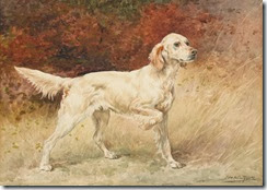 commissioner a champion english setter