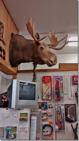 Moose in Hardware Store in Northern Idaho