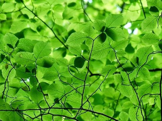 Leaves 167478 640