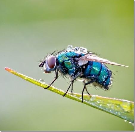 foto insecte macro