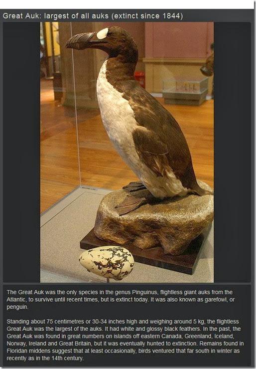 extinct-animals-008
