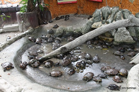 manila zoo 13