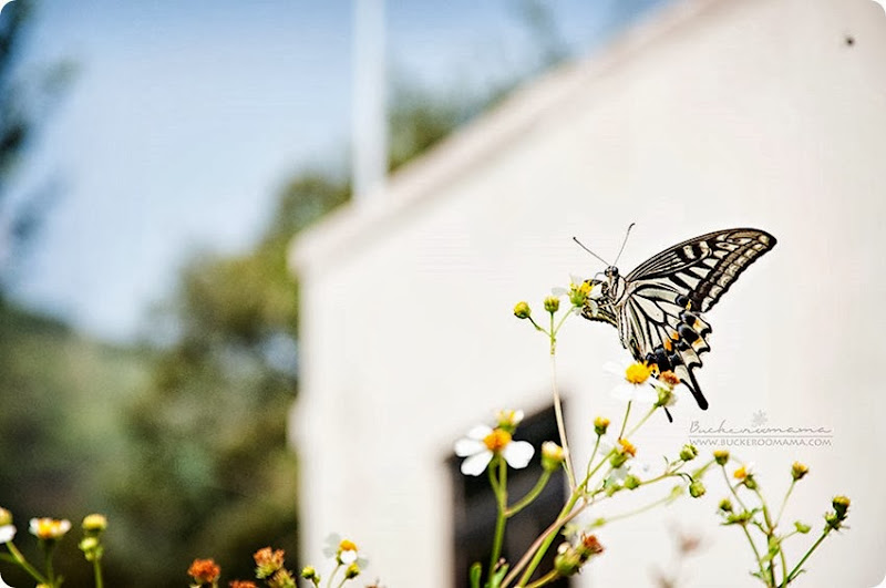 Butterfly-(2)