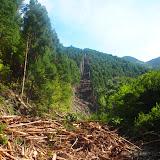 山中深くで行われる伐採の現場を視察 / Drove deep in the woods to visit a logging site.