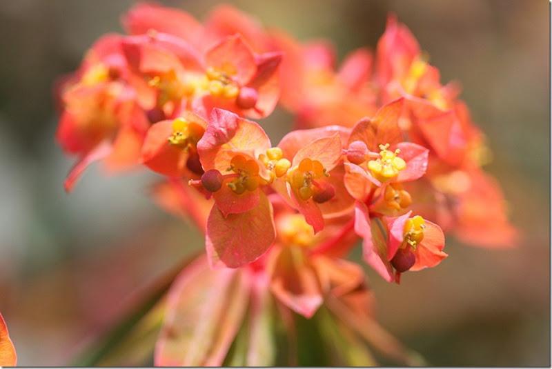 Garden May-7-blog