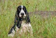 Dogs Trekking 6 (132)