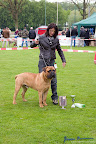 20100513-Bullmastiff-Clubmatch_31012.jpg