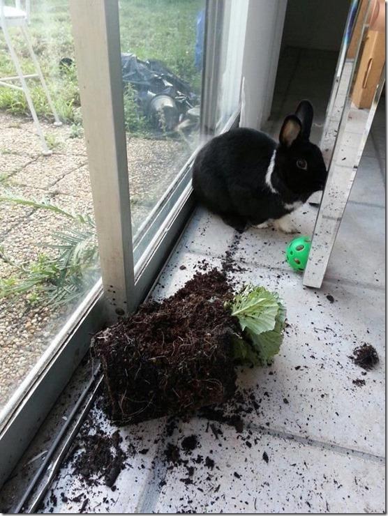 bunny-rabbit-shaming-14