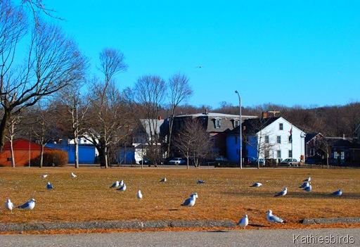 3. placid gulls-kab