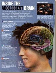 cérebro de adolescente