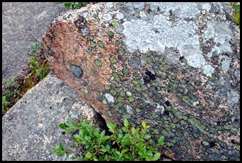 05 - colorful lichen on pink granite