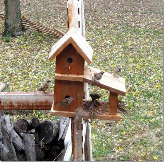 birdmotelpartytime11-05-13a