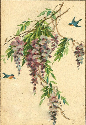 wisteriabirds