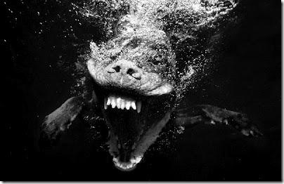 perros bajo el agua (1)