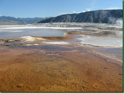 Mammoth Hot Springs Terraces (130)
