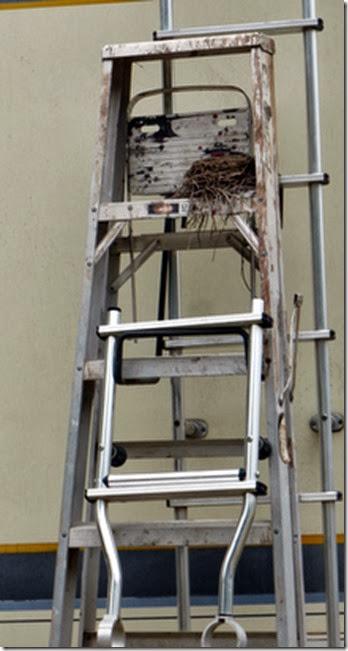 A resident's ladder