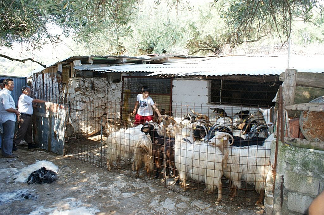 Ρυθμίσεις για την διαδικασία νομιμοποίησης αυθαιρέτων κτισμάτων κτηνοτροφικών μονάδων