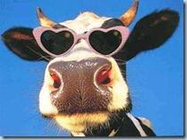 vaca-gafas