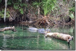 Alligator and turtle-1