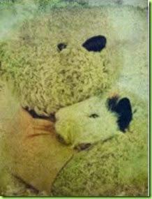 teddy_bear_hugs_a_guinea_pig_postcard-p239575930420815806en8ki_216