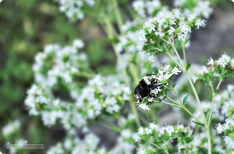Bee-(1)
