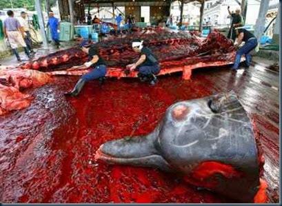 golfinhos-esquartejados-no-japão