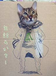 Best Cat Cosplay Ever!