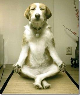 Doggie buddha