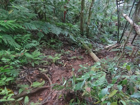 04. Carare prin jungla.JPG