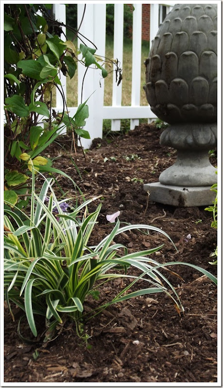 landscaping front fence 009