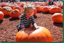 CL pumpkin