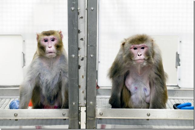 mono menos calorias