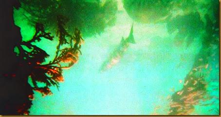 undersea photo3