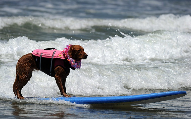 6th-surf-dog-comp2
