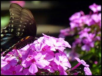 03a - Butterflies