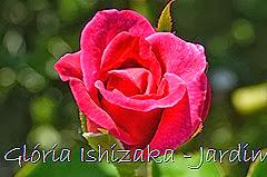 12  - Glória Ishizaka - Rosas do Jardim Botânico Nagai - Osaka