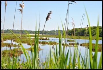 03i - Knight Trail - past the salt marsh